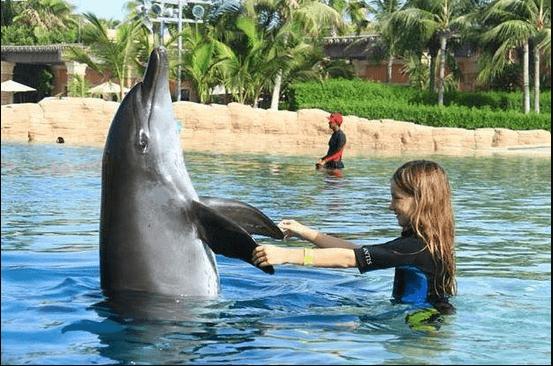 خليج الدلافين وتجربة السباحة مع الدلافين في دبي الامرات (بالصور)